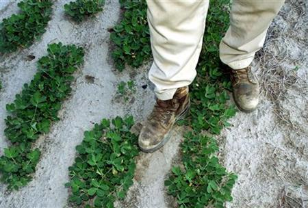 The dusty boots of Alabama farmer Sonny Corcoran stands in a peanut field in Twin Springs, Alabama, on June 27, 2000. REUTERS/Tami Chappell