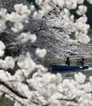 <p>Посетители парка любуются цветками сакуры в Токио апреля 2009 года. Какими бы ни были времена, японцы никогда не упускают возможность полюбоваться вишневыми деревьями в короткий период их цветения каждой весной. REUTERS/Kim Kyung-Hoon</p>