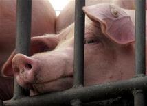 <p>Свиньи на бойне в Пекине 5 августа 2005 года. Семь жителей США заразились новой разновидностью свиного вируса в штатах Калифорния и Техас, говорится в сообщении американского Центра по контролю и профилактике заболеваний (CDC). REUTERS/Jason Lee</p>
