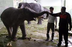 <p>Veterinarian Nguyen Hai Dang (L) and elephant specialist Kham Phet Lao check the health of circus elephant Kham Bun inside its enclosure in Hanoi May 14, 2009. Kham Bun has become a poster pachyderm against of his endangered Asian species, capturing the hearts of many Vietnamese after an old wound caused by a trap flared up. The fate of Kham Bun has made headlines in Vietnam after the Hanoi circus said the elephant, who was rescued by rangers in 2007, might need to have its front leg amputated because the wound had started to gape again. REUTERS/Kham</p>