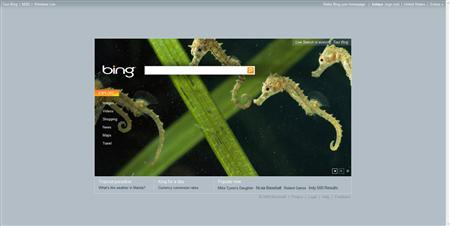 A screen grab of Microsoft's new search engine, Bing, is seen in a handout image. REUTERS/Handout