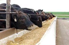 <p>Foto de archivo de ganado en la granja Wulf en Morris, Minnesota, EEUU, 27 jun 2008. Pollos con pechugas agrandadas artificialmente. Nuevas cepas de la mortal bacteria E. coli. El suministro de comida controlado por un puñado de corporaciones. REUTERS/Diane Bartz</p>