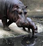 <p>Foto de archivo de la hipopótamo Rani y su cría de cuatro días en el zoológico Assam en Guwahati, India, 17 mar 2009. El Ministerio del Medio Ambiente de Colombia ordenó la muerte de los hipopótamos que habitan en las ruinas de un antiguo zoológico construido por el fallecido narcotraficante Pablo Escobar, ante la amenaza que representan, informó el viernes una fuente del organismo. REUTERS/Utpal Baruah</p>