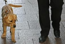 <p>Australia, cane scomparso trovato dopo 9 anni grazie a microchip. REUTERS/Daniel Munoz</p>