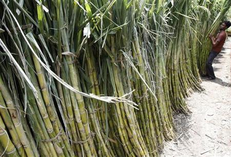 A labourer lifts a bundle of sugarcanes at a wholesale market in the eastern Indian city of Siliguri June 22, 2009. REUTERS/Rupak De Chowdhuri