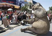<p>Foto de archivo de un elefante durante una campaña publicitaria durante el Festival de Cine de Cannes, Francia, 16 mayo 2009. Un pueblo francés prohibió que los elefantes circenses se bañen en sus playas ante la preocupación de que el excremento de los animales pueda contaminar el agua y suponga un peligro para la salud de los bañistas. REUTERS/Regis Duvignau</p>