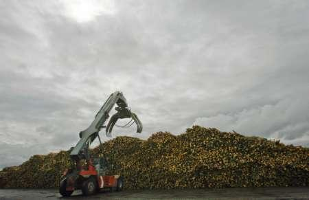 A log mover prepares to grab a load of trees from a storage pile at the UPM paper mill in Kajaani July 21, 2008. REUTERS/Bob Strong