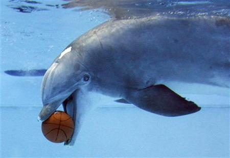 A dolphin plays with a basketball underwater at the Nuremberg zoo, April 10, 2009. REUTERS/Alexandra Beier