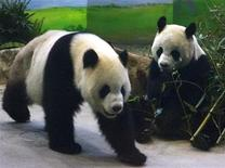 "<p>Pandas Tuan Tuan and Yuan Yuan, whose names together mean ""reunion"" in Chinese, walk around inside their enclosure at the Taipei City Zoo March 23, 2009. REUTERS/Nicky Loh</p>"
