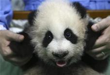 <p>Un cucciolo di panda. REUTERS/Phichaiyong Mayerku</p>