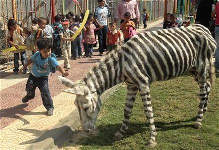 A Palestinian boy touches a dyed donkey at Marah Land zoo in Gaza City October 8, 2009. REUTERS/Mohammed Salem