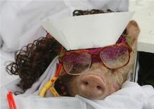 <p>Поросенок, одетый медсестрой, на костюмированном шоу в Маниле 12 сентября 2009 года. Забудьте о декоративных тойтерьерах и чихуахуа, которые помещались в вашей сумочке. Последняя модная новинка из Англии - микросвинка. REUTERS/Erik de Castro</p>