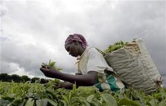 <p>A Kenyan woman picks tea leaves at Nyara tea Estate in Limuru, Januray 12, 2007. REUTERS/Antony Njuguna</p>