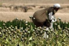 """<p>Мужчина собирает маковые коробочки в провинции Фарах, Афганистан 11 мая 2009 года. Афганский мак питает рынок героина и опия-сырца стоимостью $65 миллиардов, держа """"на игле"""" 15 миллионов наркоманов, свидетельствуют результаты исследования, проведенного ООН. REUTERS/Goran Tomasevic</p>"""