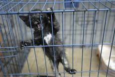 """<p>Котенок на птичьем рынке в Гуанчжоу, китайская провинция Гуандун 10 декабря 2007 года. В штате Айова зафиксирован первый случай заражения домашней кошки """"свиным"""" гриппом, сообщила Американская ассоциация ветеринаров. REUTERS/Stringer</p>"""