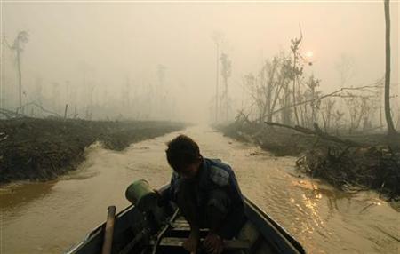 Haze blankets a damaged rainforest in Sampit regency of the Indonesia's central Kalimantan province October 3, 2007. REUTERS/Hardi Baktiantoro