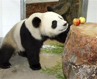 <p>Funi, a three-year-old female giant panda, looks at fruits in its new enclosure at Adelaide Zoo in the South Australia state November 28, 2009. Australia welcomed on Saturday two giant pandas from China. Zookeepers said they hope they will become the first breeding pair in the southern hemisphere. REUTERS/Zoos SA/Bryan Charlton/Handout</p>