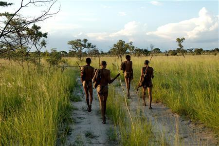 Bushmen, indigenous hunter-gatherers, of southern Africa walk in the Namibian Bush in this undated handout photo. REUTERS/Stephan C. Schuster/Handout