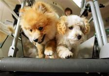 <p>Foto de archivo de un par de cachorros de perro sobre una tira de ejercicios en la tienda, hotel y tienda de comida para mascotas Ken21, en Tokio, feb 8 2003. Alguien dijo alguna vez que si tu perro está gordo es porque no haces suficiente ejercicio. REUTERS/Eriko Sugita</p>