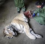 <p>18 novembre 2007. Tigre dello Shenyang Iceberg Animal Zoo sbranata probabilmente per fame dalle altre tigri con cui divideva la gabbia. REUTERS/China Daily</p>