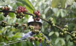 <p>An ethnic M'mong farmer visits a coffee plantation in Dam Rong district, in Vietnam's central highland province of Lam Dong September 6, 2009. REUTERS/Kham</p>