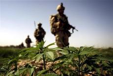 <p>Militari della coalizione Nato marciano in un campo di marijuana a Sangsar, in Afghanistan. REUTERS/Finbarr O'Reilly (AFGHANISTAN)</p>