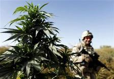 <p>Imagen de archivo de una planta de cannabis en el distrito de Panjwaii, provincia de Kandahar, Afganistán. Oct 3 2009. Desde hace tiempo el mayor productor mundial de opio, ingrediente básico de la heroína, Afganistán ahora se ha convertido en el principal proveedor de cannabis, con un cultivo a gran escala en la mitad de sus provincias, dijo el miércoles Naciones Unidas. REUTERS/Finbarr O'Reilly /ARCHIVO</p>