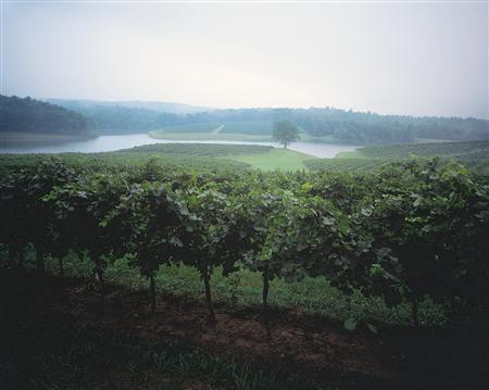Vineyards at Biltmore Estate in Asheville, North Carolina are seen in this undated handout photo. REUTERS/The Biltmore Company/Handout