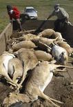 <p>Люди загружают кузов автомобиля телами мертвых сайгаков в поле на западе Казахстана 22 мая 2010 года. На западе Казахстана, где обитает основная масса степных антилоп - сайгаков - уральской популяции, погибли почти 12.000 этих животных, сообщило МЧС, отнеся падеж на вспышку пастерелеза. REUTERS/Uralskaya nedelya/Raul Uporov</p>