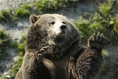 <p>A grizzly bear stands up at St-Felicien Wildlife Zoo in St-Felicien, Quebec September 24, 2008. REUTERS/Mathieu Belanger</p>