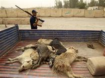 <p>An armed member of Baghdad council squad walks past carcasses of stray dogs loaded in a cart during a culling campaign in Baghdad June 9, 2010. REUTERS/Saad Shalash</p>
