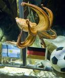 <p>Après un sans-faute jusqu'ici, Paul le poulpe a pronostiqué, depuis l'aquarium d'Oberhausen, une victoire difficile de l'Allemagne contre l'Argentine en quart de finale du Mondial. /Photo prise le 29 juin 2010/REUTERS/Kirsten Neumann</p>