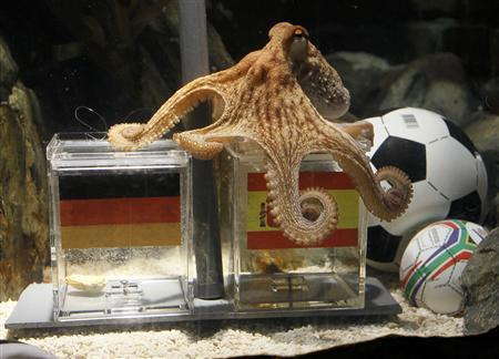 Two year-old octopus Paul, the so-called ''octopus oracle'' predicts Spain's victory in their 2010 World Cup semi-final soccer match against Germany by choosing a mussel, from a glass box decorated with the Spanish national flag instead of a glass box with the German flag, at the Sea Life Aquarium in the western German city of Oberhausen July 6, 2010. Paul has correctly picked the winner of Germany's five World Cup results so far. REUTERS/Wolfgang Rattay