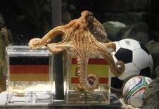 <p>En prédisant la défaite de l'Allemagne face à l'Espagne en demi-finale du Mondial, Paul le poulpe ne s'est guère attiré de sympathies outre-Rhin, et la presse se demande désormais à quelle sauce l'accommoder. /Photo prise le 6 juillet 2010/REUTERS/Wolfgang Rattay</p>