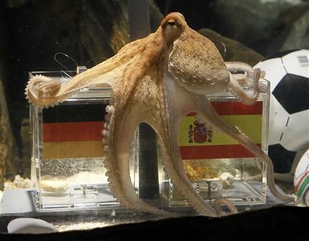 Two year-old octopus Paul, the so-called ''octopus oracle'' predicts Spain's victory in their 2010 World Cup semi-final soccer match against Germany by choosing a mussel, from a glass box decorated with the Spanish national flag instead of a glass box with the German flag, at the Sea Life Aquarium in the western German city of Oberhausen July 6, 2010. REUTERS/Wolfgang Rattay