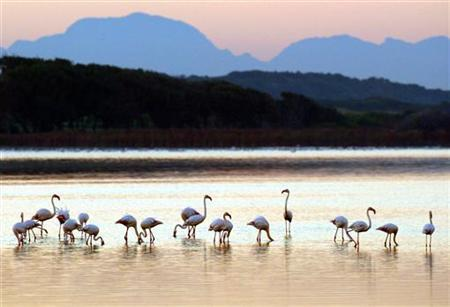 Flamingoes take flight at dawn at Zeekoevlei nature reserve in Cape Town, June 20, 2003. REUTERS/Mike Hutchings