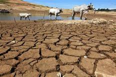<p>Коровы идут по высохшей почве в одной из северных провинций Тайланда, 17 июня 2010 года. Аномальная жара, установившаяся в центре России и угрожающая урожаю, может приблизить ужесточение монетарной политики Центробанка, который будет вынужден ответить на рост цен повышением ставок. REUTERS/Kerek Wongsa</p>