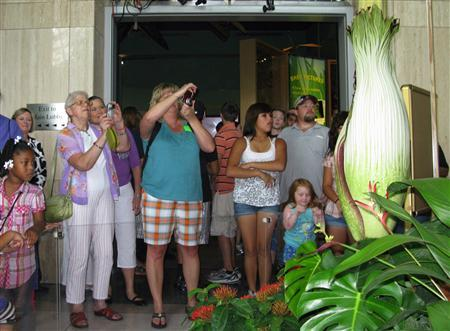 Visitors line up at the Houston Museum of Natural Science to catch a glimpse, and a whiff, of the rare Corpse Flower, which emits a carrion-like stench when it blooms to attract pollinating insects July 15, 2010. REUTERS/Alyson Zepeda