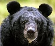 <p>Гималайский медведь в зоопарке в Дарджилинге 17 октября 2006 года. Гималайский медведь, учуяв запах бутерброда с арахисовым маслом, залез в автомобиль Toyota, случайно переключил рычаг коробки передач в нейтральное положение, отчего машина покатилась по склону и врезалась в деревья. REUTERS/Rupak De Chowdhuri</p>