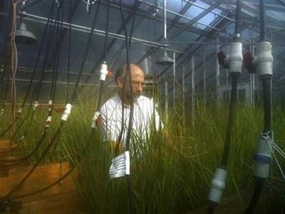 Dr. Irv Mendelssohn observes samples of marsh grasses at Louisiana State University in Baton Rouge, Louisiana, July 16, 2010. REUTERS/Debbie Zabarenko