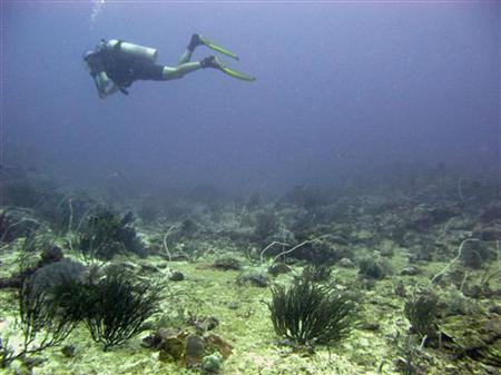 A diver explores dead coral reefs in Gili Trawangan at Indonesia's Lombok island May 13, 2009. REUTERS/Nila Tanzil