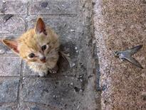 <p>Котенок сидит рядом с рыбным магазином в городе Эс-Сувейра, 14 июля 2010 года. Латвийские спасатели, вернувшиеся с тушения пожаров в России, в минувшие выходные освободили кота, голова которого застряла в консервной банке. REUTERS/Lucy Nicholson</p>