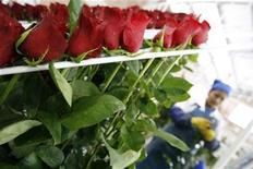 <p>Foto de archivo de una empleada en una granja de flores en Cayambe, Ecuador, feb 10 2009. El delicado aroma de las rosas blancas y rojas despierta la creatividad del chef ecuatoriano Hugo Tigselema. El resultado: una fusión de olores y sabores inexplicables al paladar. REUTERS/Guillermo Granja (ECUADOR)</p>