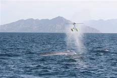 <p>A remote-controlled helicopter used by researchers to collect whale blows is seen in a handout photo. REUTERS/Diane Gendron/Handout</p>