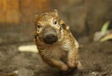 <p>Свинья бегает по загону зоопарка в Вуппертале 1 июля 2009 года. Октябрь стал не лучшим месяцем для одичавшей свинки в Техасе. REUTERS/Ina Fassbender</p>