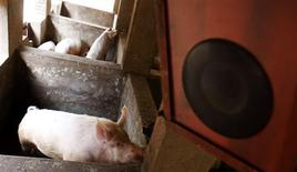 <p>A pig listens to music inside its pen at a farm in Nyirangarama in Northern Rwanda, September 28, 2010. REUTERS/Hereward Holland</p>