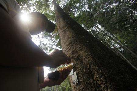 A technician reads information, transmitted from a microchip attached to a tree, with his GPS device during a presentation of the Monitoring System Electronic Tracking and Forestry project in Nova Mutum in Mato Grosso state, midwestern Brazil, August 28, 2010. Each microchip, which is attached to a tree's base, holds data about its location, size and who cut it down. The chips allow land owners using sustainable forestry practices to distinguish their wood from that acquired through illegal logging that each year destroys swathes of the forest. REUTERS/Ricardo Moraes