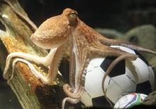 <p>Осьминог Пауль плавает в аквариуме с маленьким футбольным мячом, 9 июля 2010 года. Гроза тотализаторов осьминог Пауль, прославившийся во время прошедшего в ЮАР чемпионата мира по футболу, умер в аквариуме немецкого Оберхаузена в возрасте двух лет. REUTERS/Wolfgang Rattay</p>