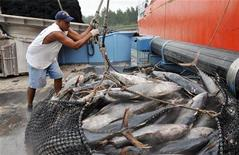 <p>Workers offload tuna from a fishing boat in Port Victoria, Seychelles, August 4, 2008. REUTERS/George Thande</p>