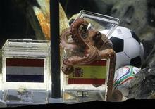 "<p>Two year-old octopus Paul, the so-called ""octopus oracle"" predicts Spain's 2010 soccer World Cup final victory over The Netherlands by opening and choosing a mussel, from a glass box decorated with the Spanish national flag instead of a glass box with the Dutch flag, at the Sea Life Aquarium in the western German city of Oberhausen July 9, 2010. REUTERS/Wolfgang Rattay</p>"